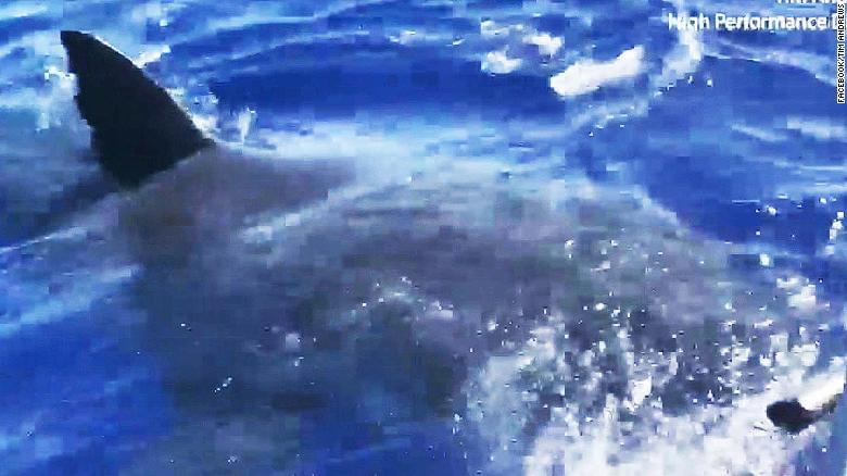 Legendary great white shark spotted off Hawaii coast