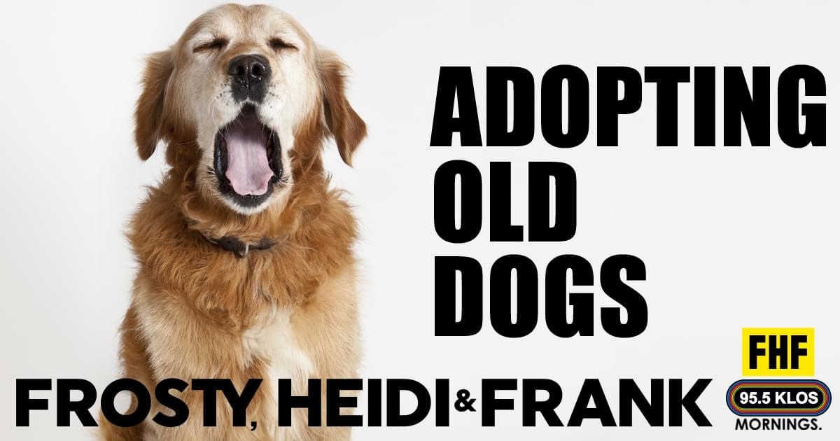 Adopting Old Dogs