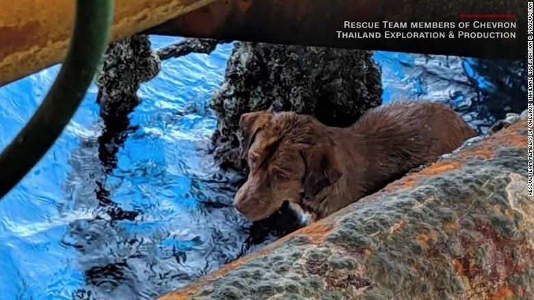 Rescuers Save Dog Found Swimming 135 Miles Off Thailand!
