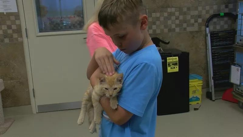 Animal Services Overflowing With Cats And Kittens