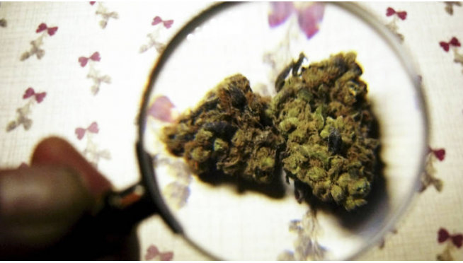 Did Texas Accidentally Legalize Weed?