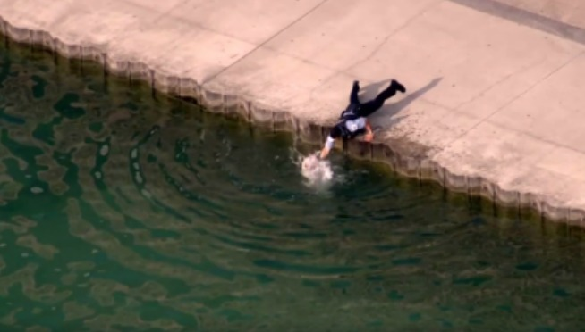Watch: Dog Get Rescued From Lake Michigan By Officer After Car Crash