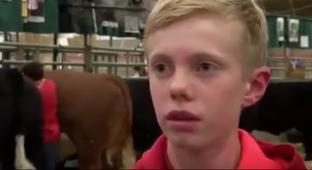 Kid Gets Stuck In-between Cows