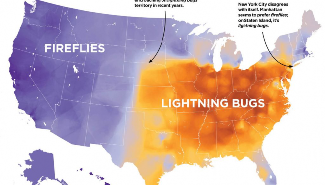 So, what are those bugs that light up at night — CALLED?  Depends on where you are.