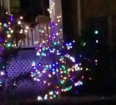 Saturday is National Christmas Lights Day