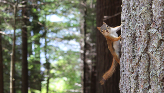 """Alleged """"meth-fueled attack squirrel"""" owner arrested."""