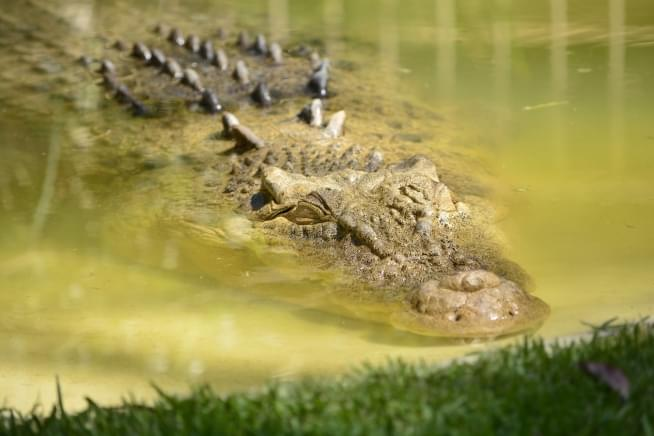 CPD confirms alligator loose in the Humboldt Park lagoon