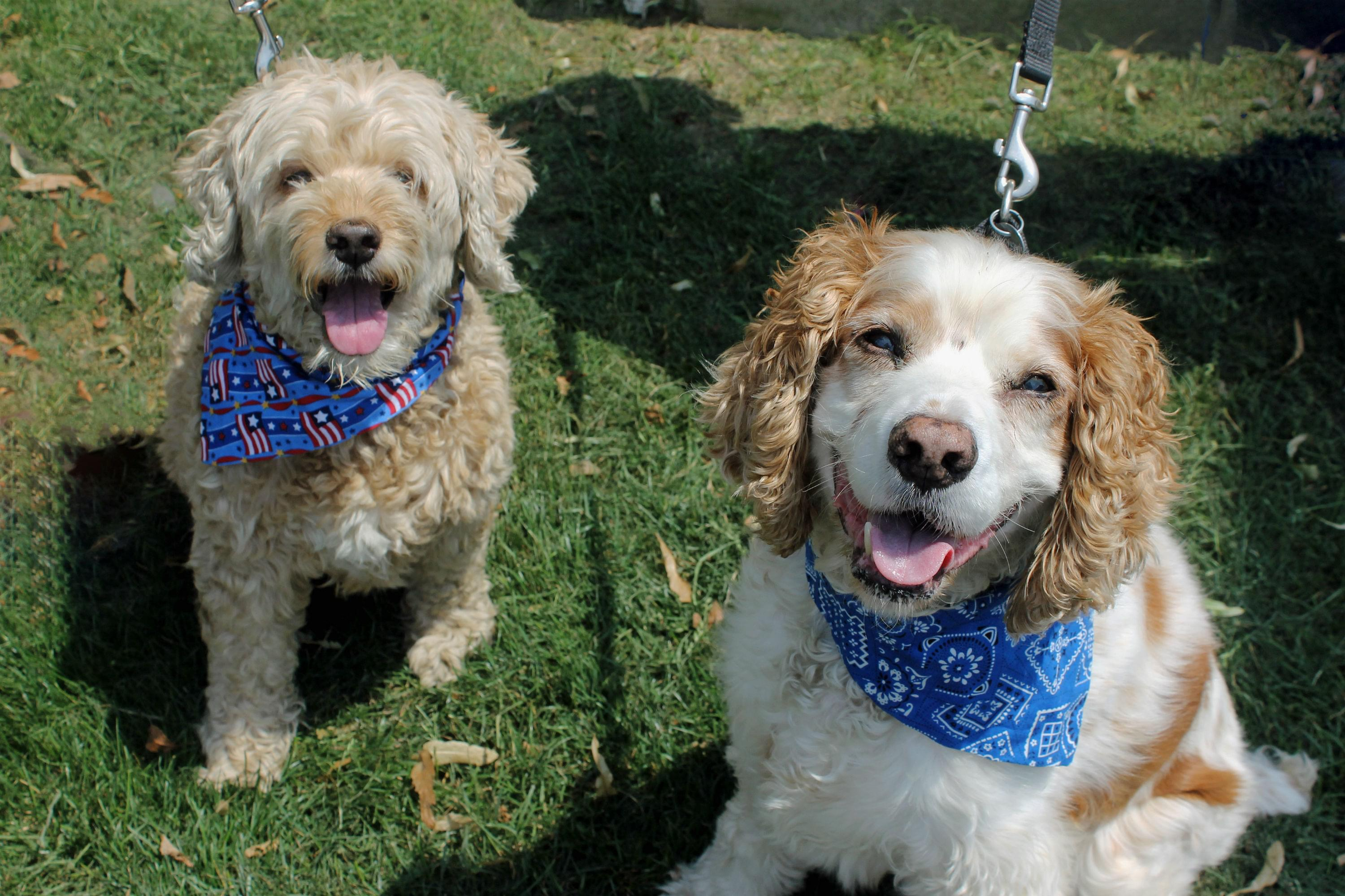 PAWS pet of the week: Teddy & Sherman!