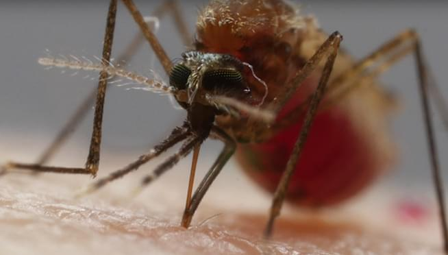 First 2019 case of West Nile in Chicago confirmed