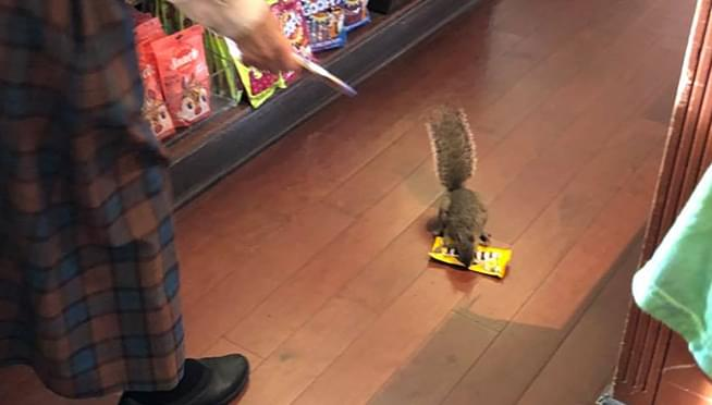 Squirrel filmed stealing M&M's from Disney World Store