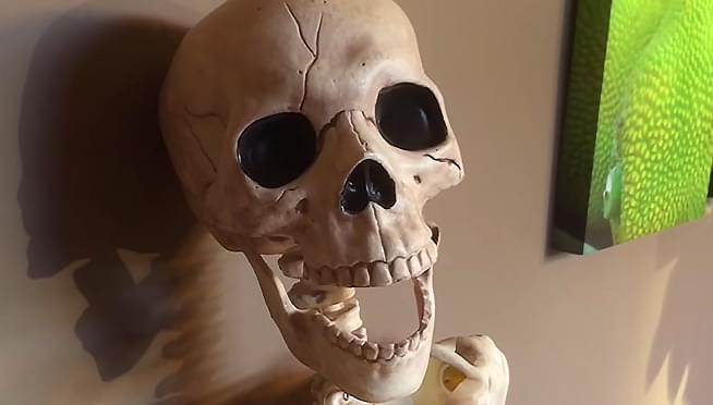 Doctors warn: Skeletons must not be sold as halloween props