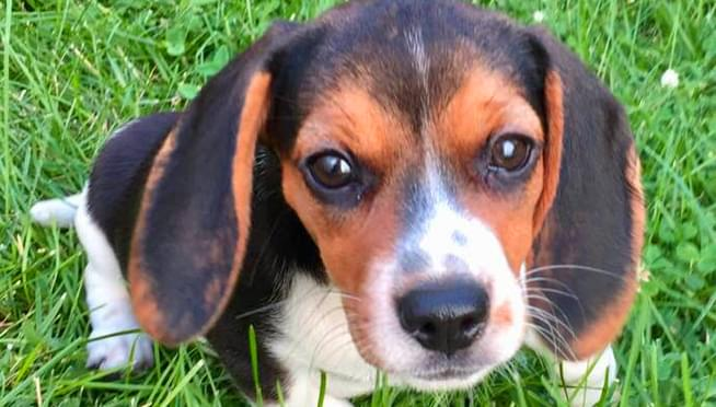 One airline is providing nervous fliers with puppies to cuddle before flights
