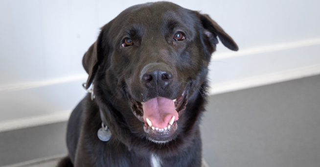 PAWS Chicago is waiving the adoption fees for overlooked dogs and cats this weekend!