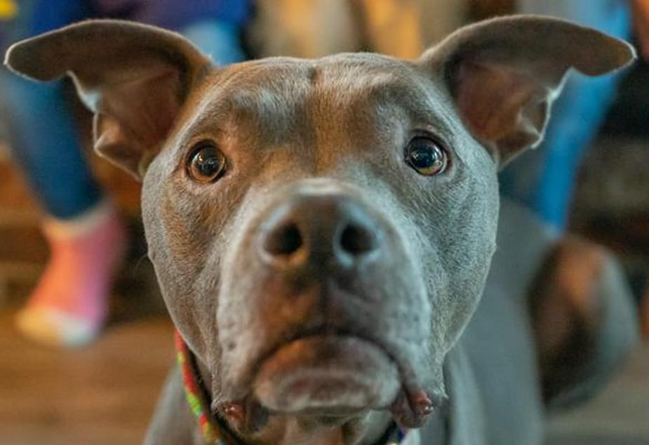 'Puppy Dog Eyes' are an evolutionary trick to manipulate humans