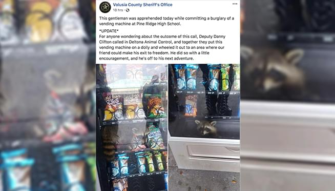 Furry bandit found in vending machine