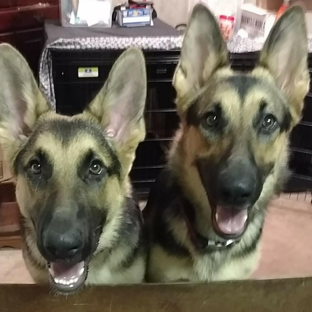 44 - Diesel and Kya