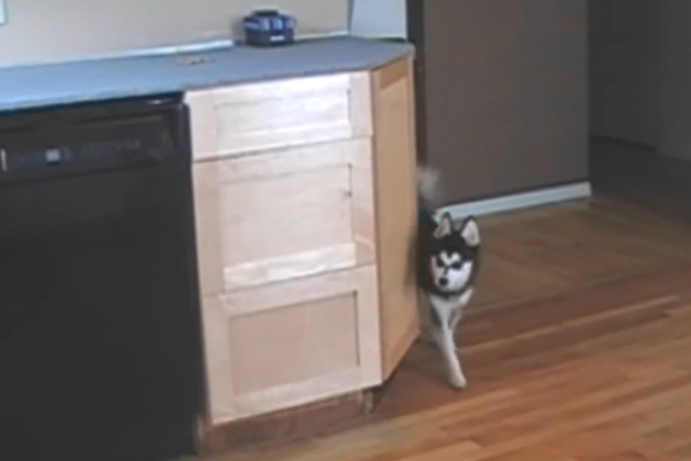 Genius Dog Finds Way to Get Treats on Counter [VIRAL VIDEO]