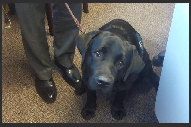 Family seeking service dog to hold fundraising golf tournament