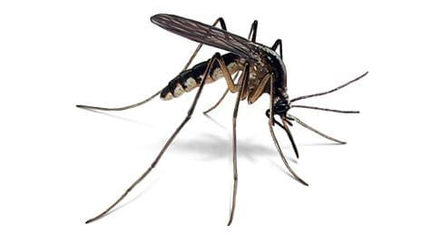 State Health Officials Concerned About Mosquitoes
