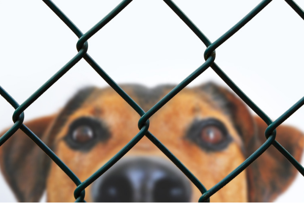 Indianapolis Shelter's New Program Lets You Rent A Dog For A Day