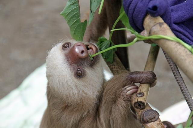 The New Sloth Exhibit At The Indianapolis Zoo Opens Memorial Day Weekend