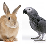 The Newest Video Splitting The Internet: Is He Petting A Rabbit Or A Bird? [WATCH]