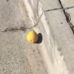 Watch: Video Of A Lemon Rolling Down A Hill…For Nearly A Quarter Of A Mile!