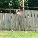 Watch: Boy Plays Catch With Neighbor Dog…Best Video Of The Week!