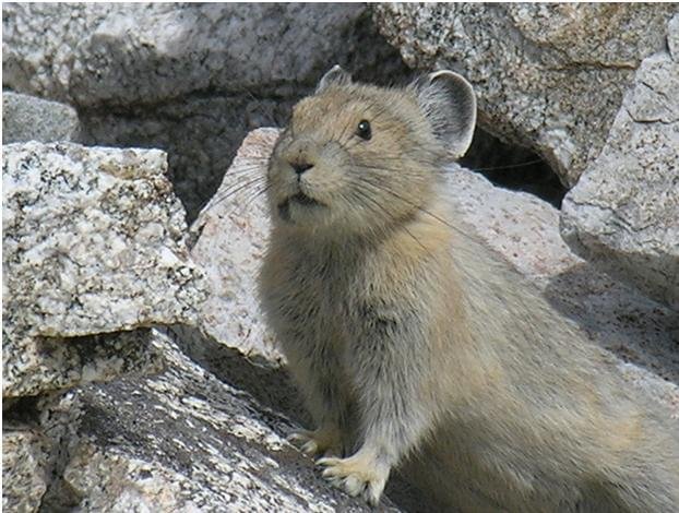 "Watch A Pika Channel His Inner ""Freddie Mercury"" And Perform At Live Aid"