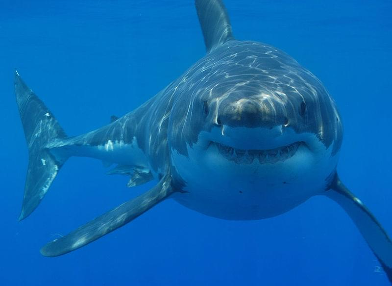 'Baby Shark' Song May Be Annoying But It Could Save Your Life!