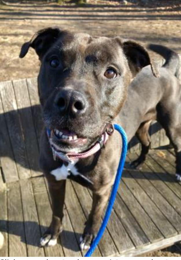 WICC600 Pet of the Week- February 14th-Lucky
