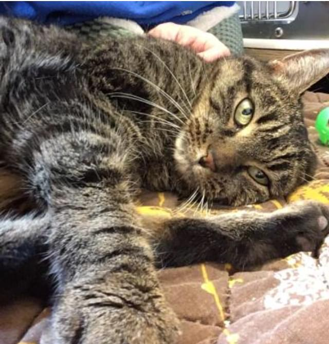 Pet of the Week- March 7th- Tessa
