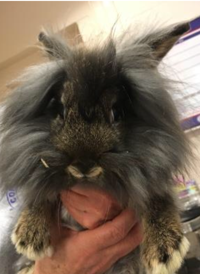 Pet of the Week- March 14th- Thumper
