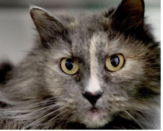 Pet of the Week- March 28th- Kitty