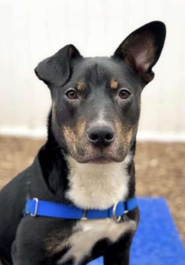 Pet of the Week- April 4th- Rocky