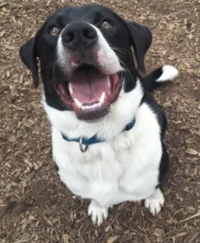 Pet of the Week- April 18th- Odon