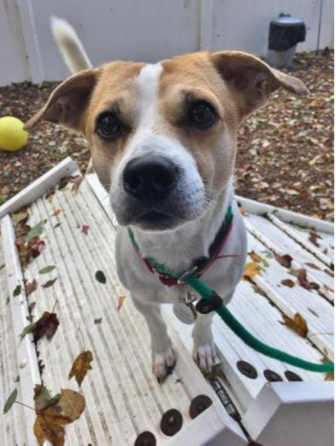 Pet of the Week- October 31st- Max