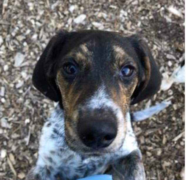 Pet of the Week- December 26th- Clyde