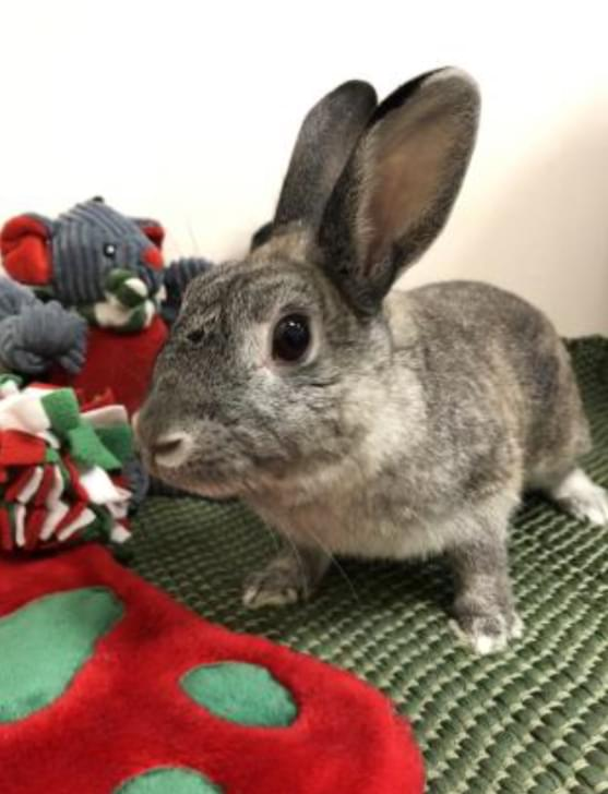 Pet of the Week- January 2nd- Lola