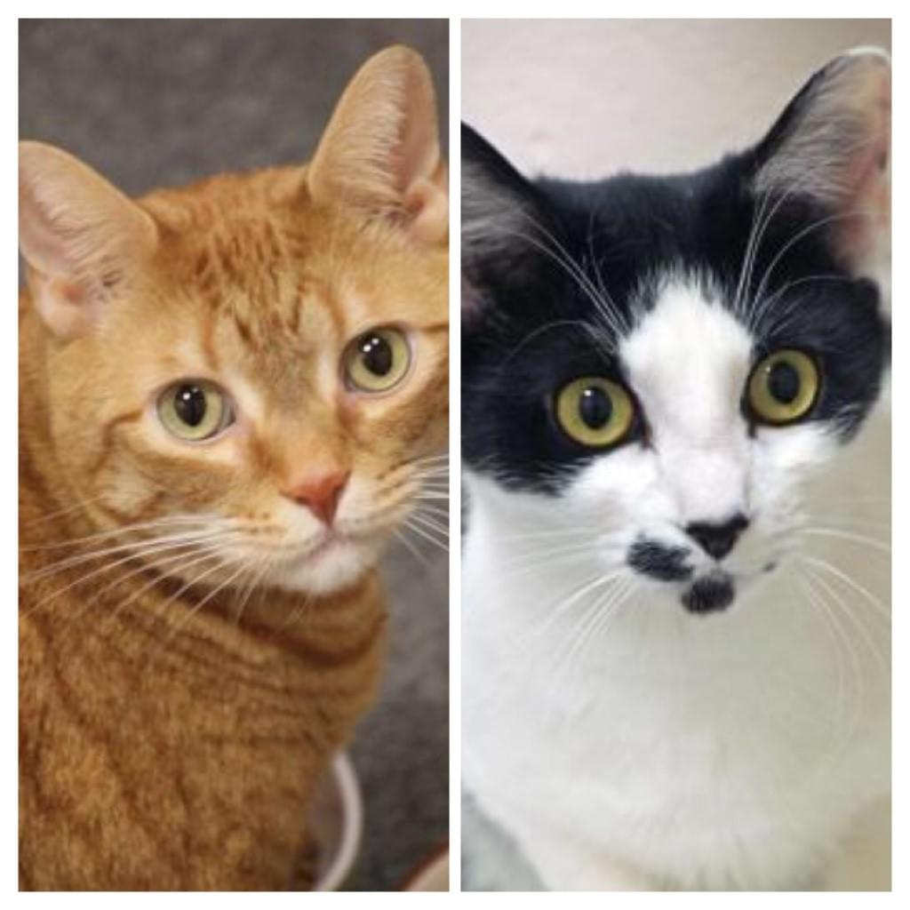 Pet of the Week- February 13th- Bella & Cholito