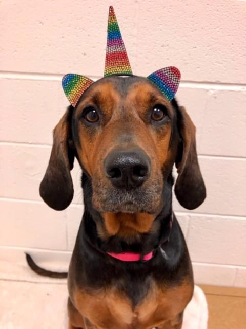 Pet of the Week- February 20th- Maggie