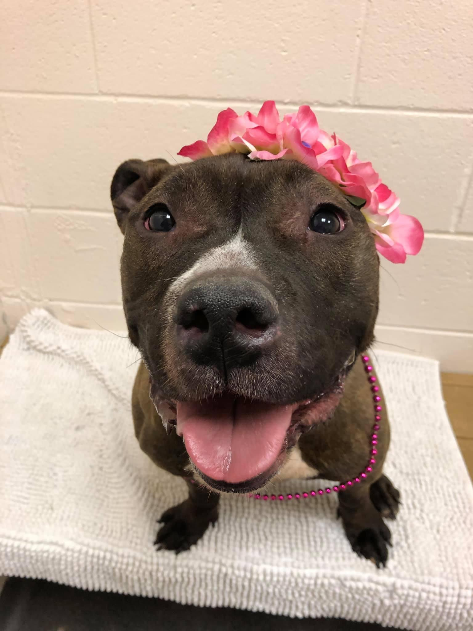 Pet of the Week- March 13th- Tena