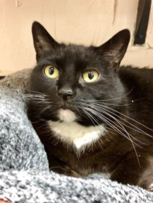 Pet of the Week- March 20th- Chinny