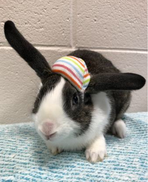 Pet of the Week- March 27th- Kringle