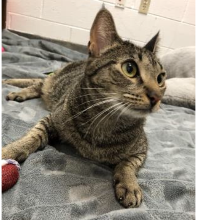 Pet of the Week- April 10th- Amores