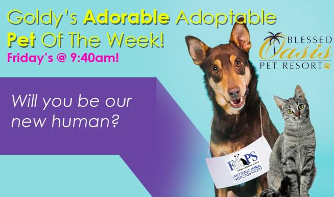 ADOPTABLE PET OF THE WEEK