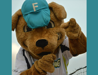 You could win tickets to Swampdogs home games, and the chance to throw the first pitch!