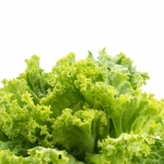 THROW AWAY YOUR ROMAINE LETTUCE