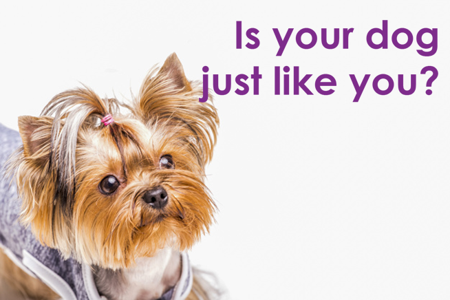 Do you share personality traits with your pet?