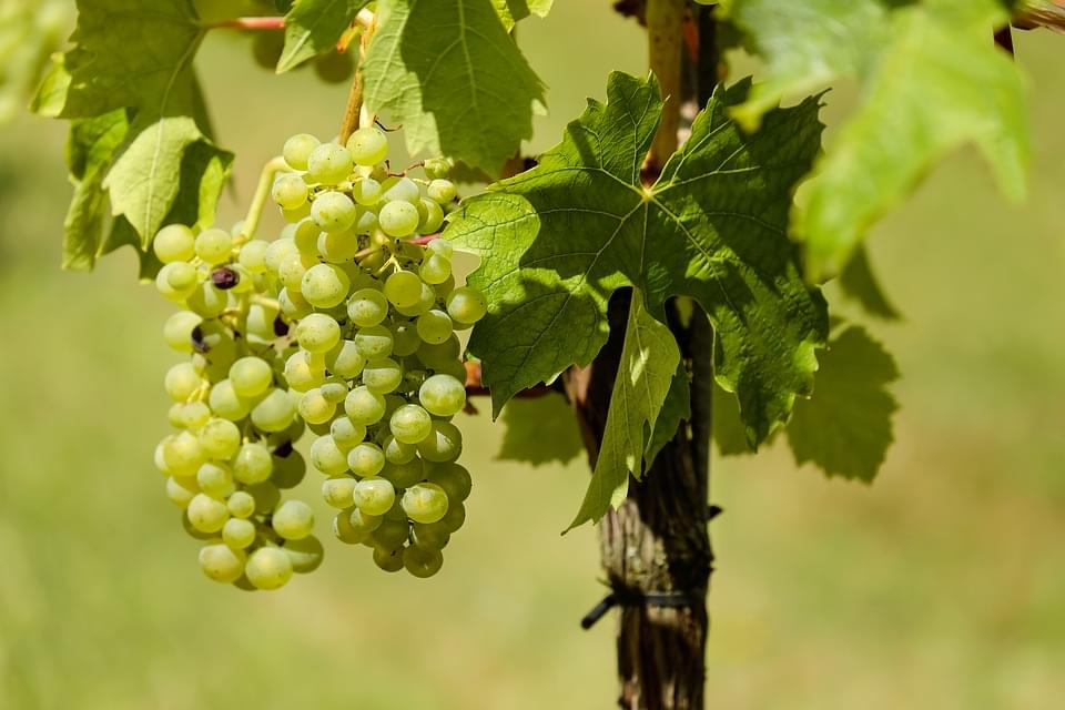 Partial Government Shutdown Could Affect Wine Grape Prices